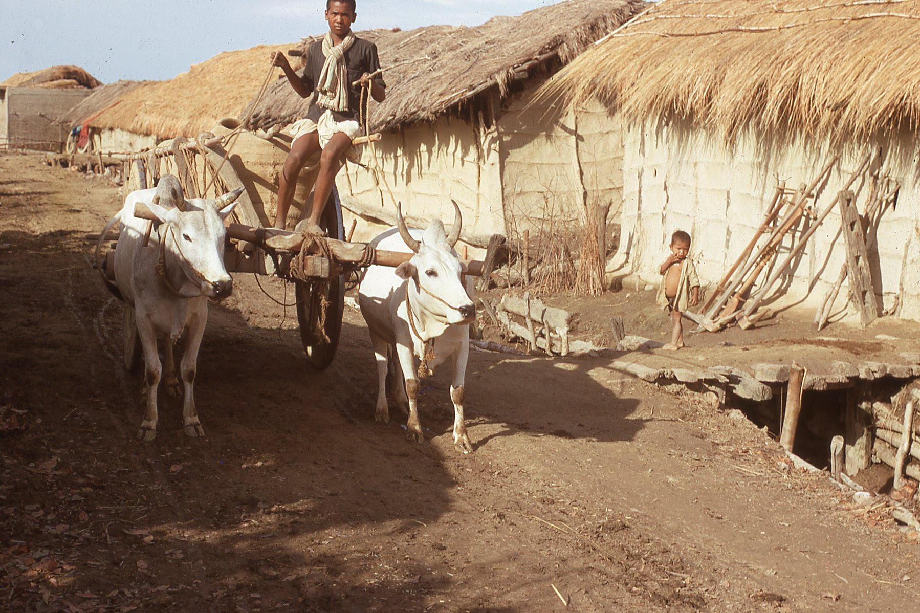 A man rides through village carrying grain on an ox cart, led by two oxes, as a child looks on from a walkway between the houses.