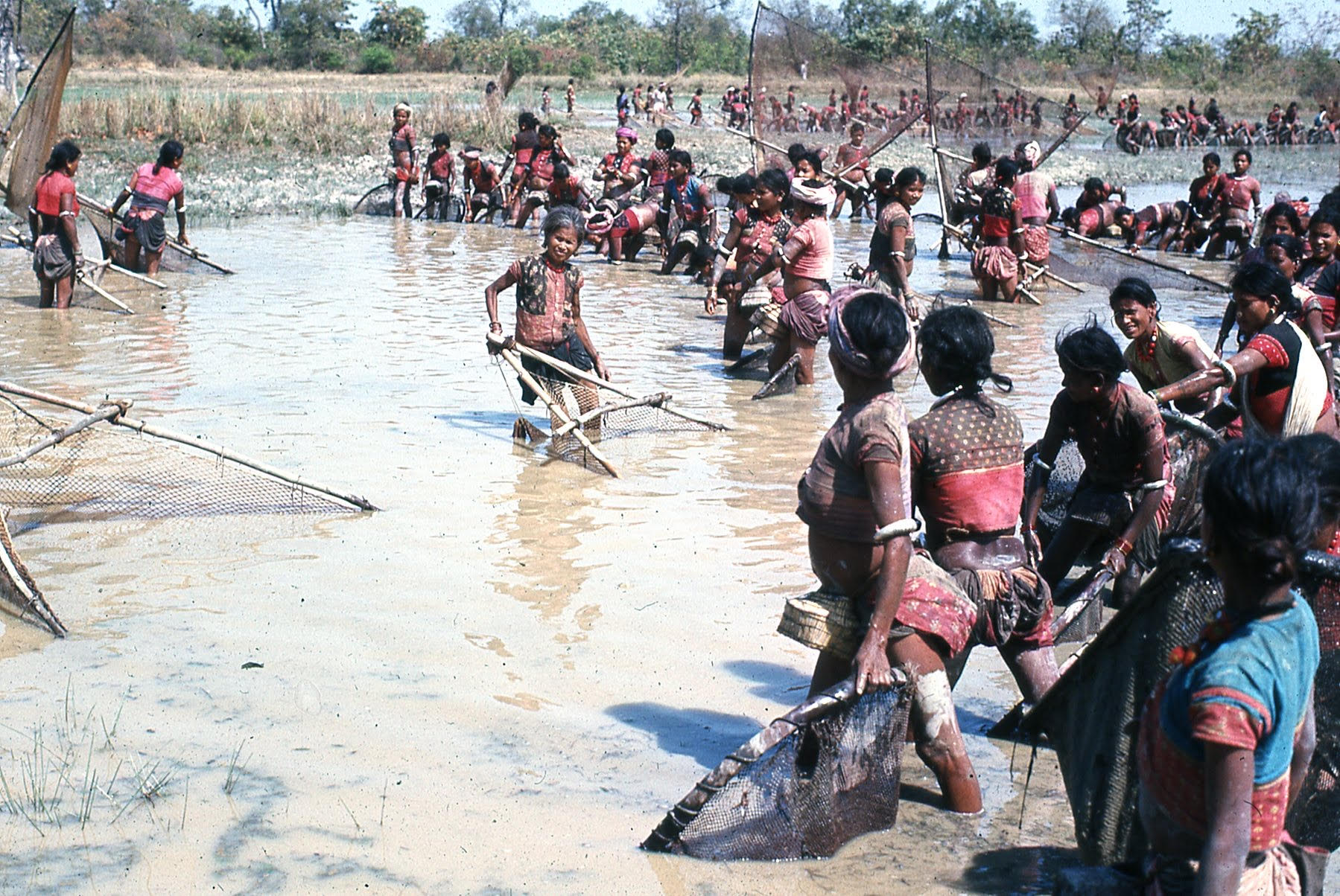 Tharu women fish in a local pond during a community fishing event.